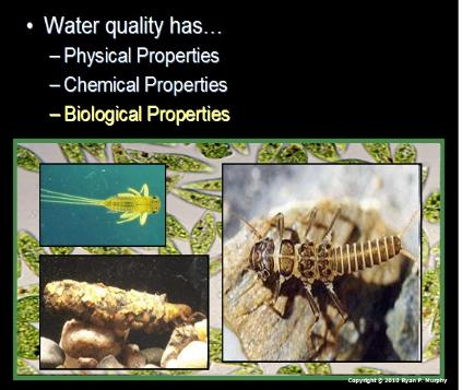 Rivers, Lakes, Water Quality Unit Powerpoint / Lessons for